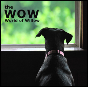 The World of Willow: Typing is Difficult with Paws