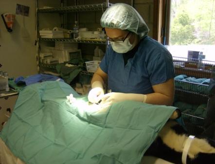 Pets Alive Surgery