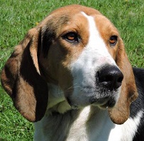 Dog of the Week – 04-25-16