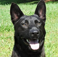 Dog of the Week – 06-27-16