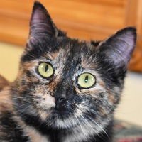 Cat of the Week – 11-20-17