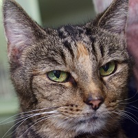 Cat of the Week – Sally Brown