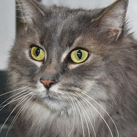 Cat of the Week – Shermy