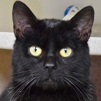 Cat of the Week – Neo