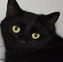 Cat of the Week – Spooky