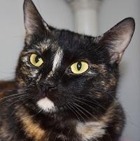 Cat of the Week – Yara