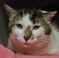 Cat of the Week – Kirby