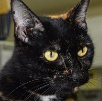Cat of the Week – Lilly