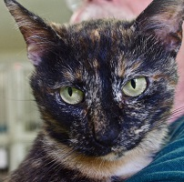 Cat of the Week – Maggie