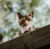 What to Do If Your Cat Goes Missing