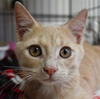 Cat of the Week – Simba