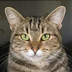 Cat of the Week – Aretha
