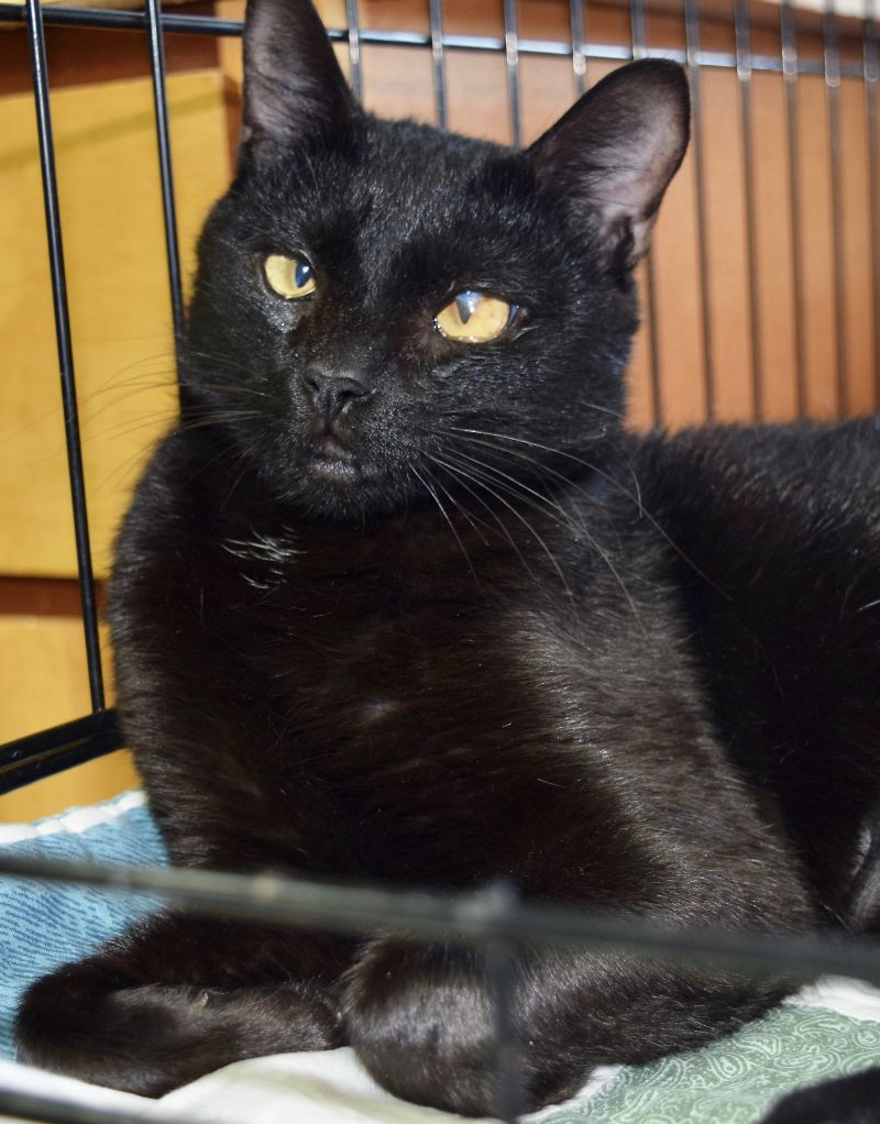 Cat of the Week - Raven