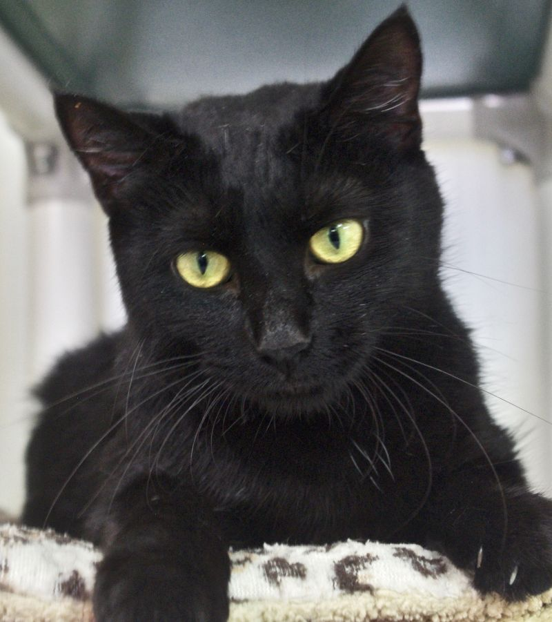 Cat of the Week - Veronica