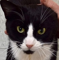 Cat of the Week – Cher