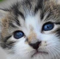 Blog: Fostering Kittens Saves Lives