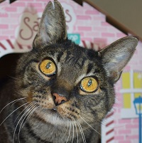 Cat of the Week – Juno