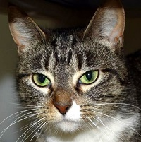 Cat of the Week – Gretel
