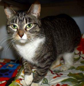 Cat of the Week - Gretel