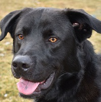 Dog of the Week – Clooney