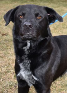 Dog of the Week - Clooney