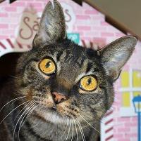 Cat of the Week – Juno