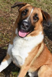 Dog of the Week - Lucky