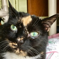 Cat of the Week – Toni