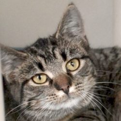 Cat of the Week – Tory