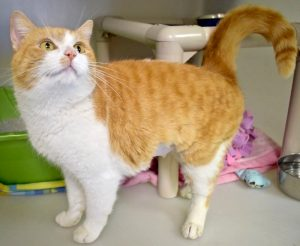 Cat of the Week - Heart