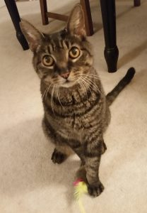 Cat of the Week - Juno