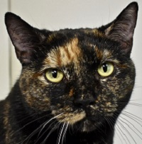 Cat of the Week – Magpie