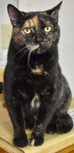 Cat of the Week - Magpie
