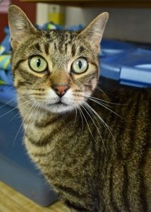 Cat of the Week - Mister