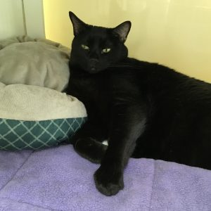 Cat of the Week - Danny