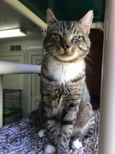 Cat of the Week - Merle