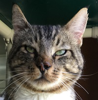 Cat of the Week – Merle