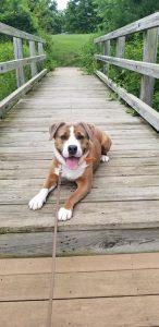 Dog of the Week - Merlin