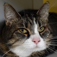 Cat of the Week – Mia