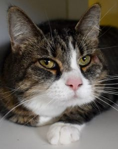 Cat of the Week - Mia