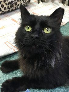 Cat of the Week - Sabre