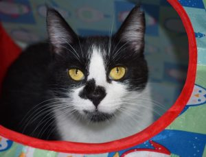 Cat of the Week - Cher