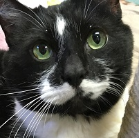 Cat of the Week – Charlie