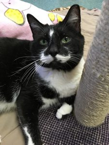 Cat of the Week - Charlie