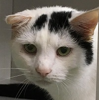 Cat of the Week – Patches