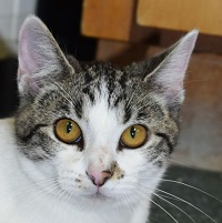 Cat of the Week – Peggy Sue