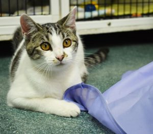 Cat of the Week - Peggy Sue