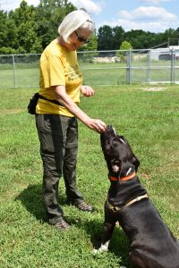 Volunteer training a dog to sit