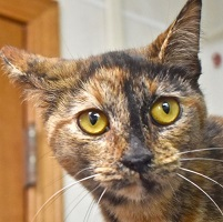 Cat of the Week – Godiva