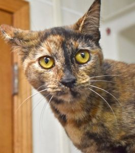 Cat of the Week - Godiva